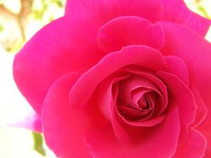 dimagrire-non-funziona-nutri-la-bellezza, life coach spirituale