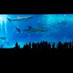 ricapitolazione-aquario