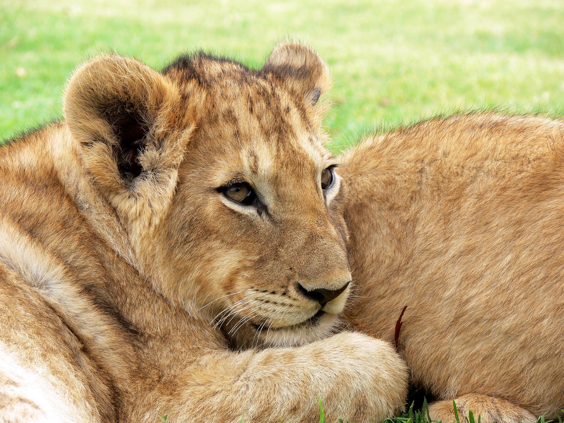 ricapitolazione-leone