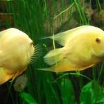 ricapitolazione-pesci