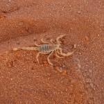 ricapitolazione-scorpione