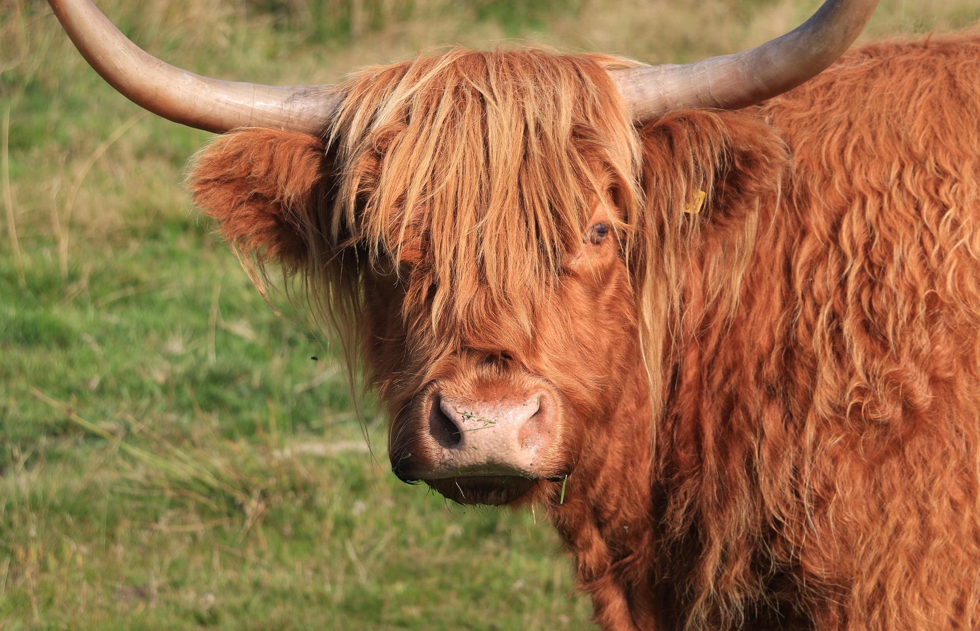 ricapitolazione-toro