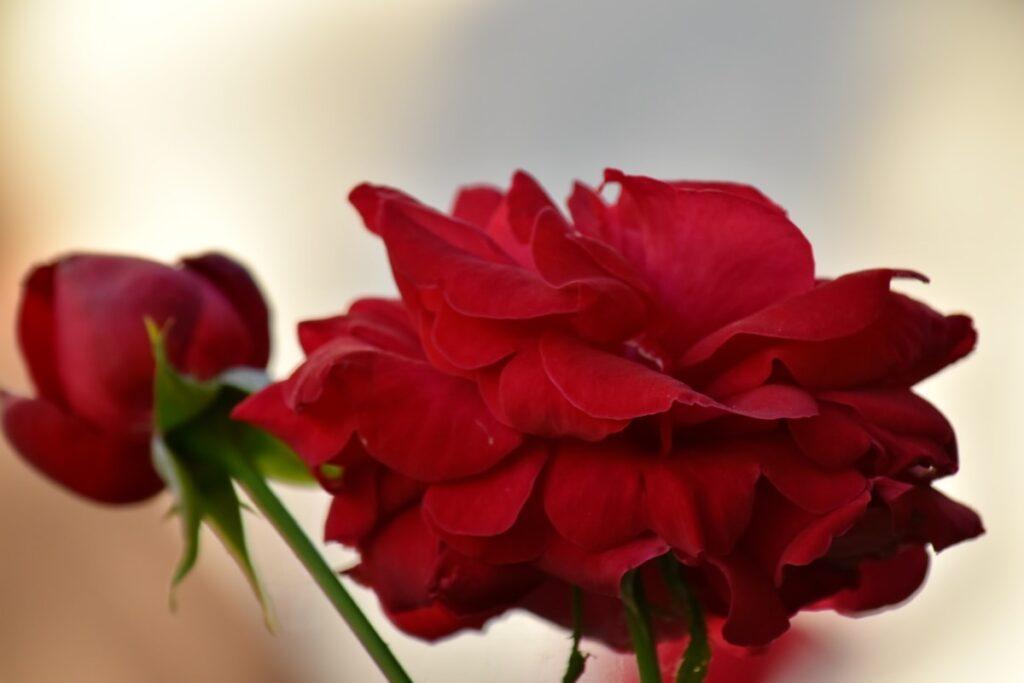 narcisisti, come riconoscerli ed evitarli in amore